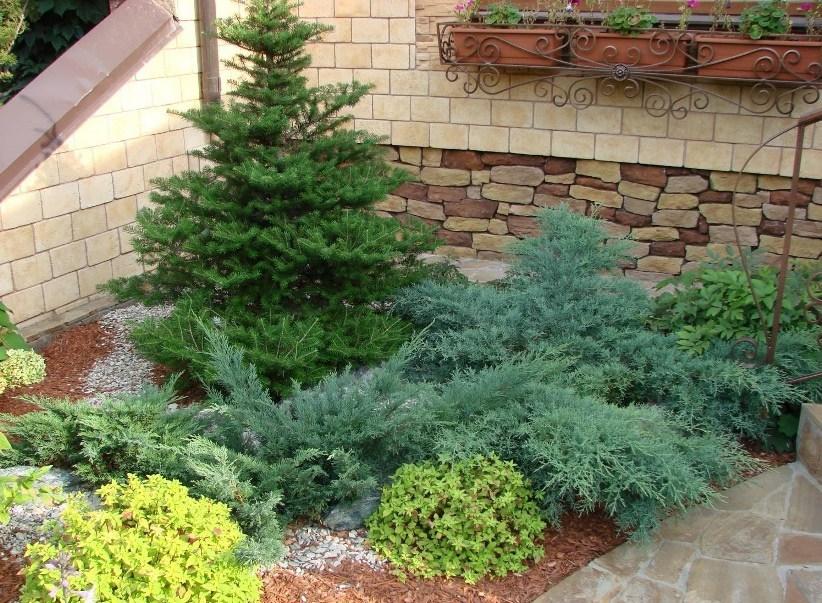 Что такое можжевельник или можжевеловое дерево?