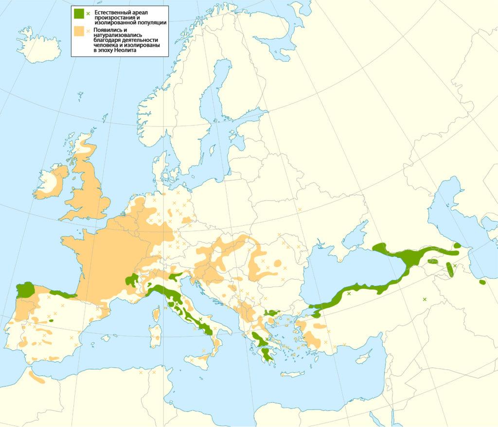 Карта распространения съедобного каштана