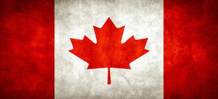 Могучий канадский клен