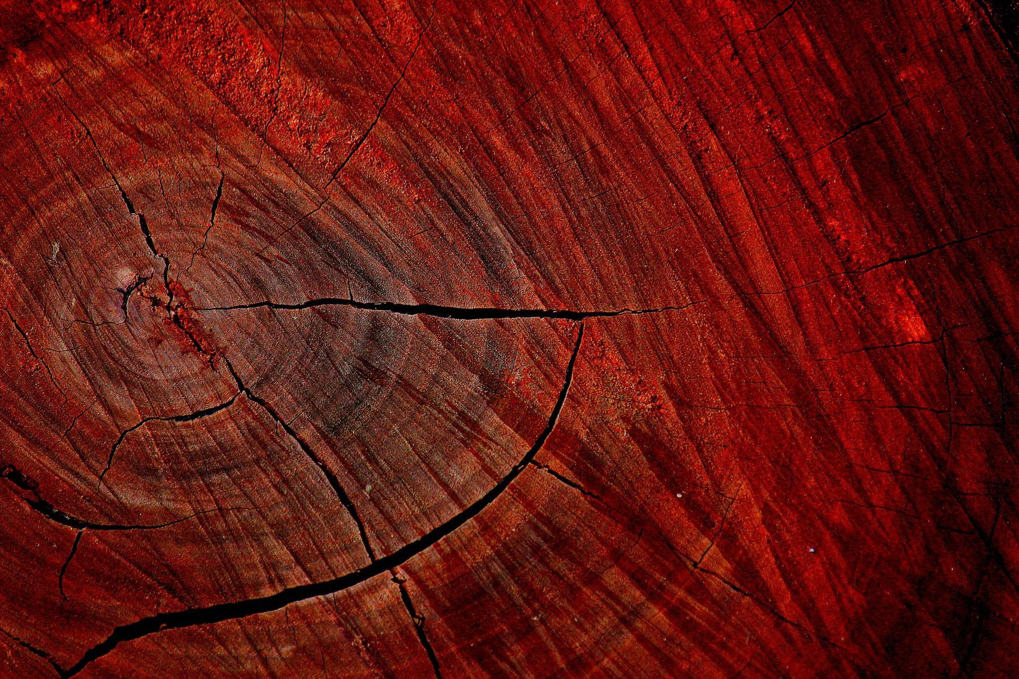 Спил красного дерева.