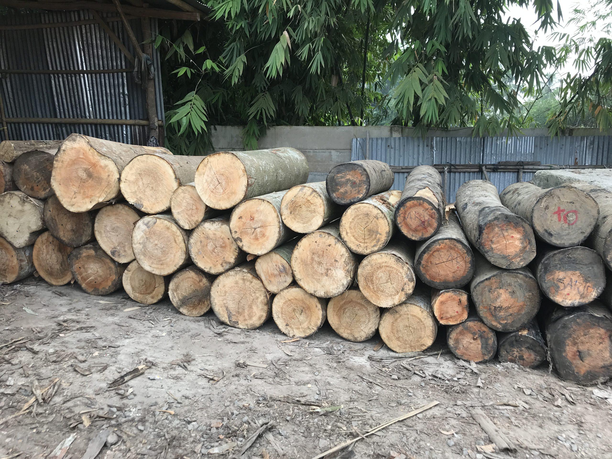 Заготовленная древесина керуинг.