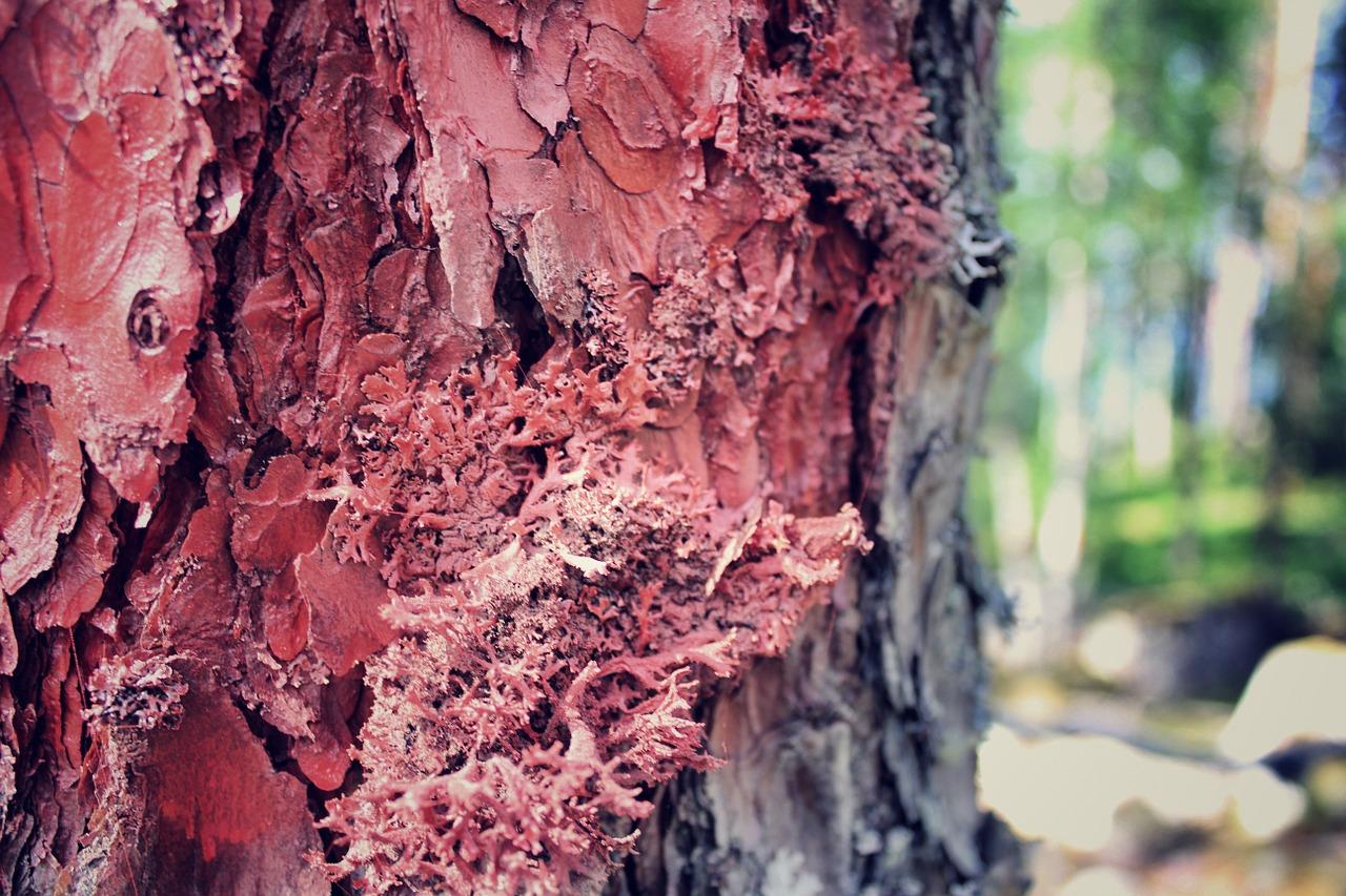 Виды красного дерева.