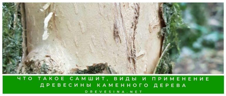 Что такое самшит, виды и применение древесины каменного дерева