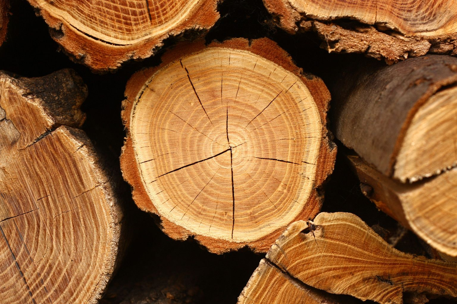 Защита древесины от гниения.