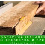 Клен сахарный или канадский: описание древесины и применение