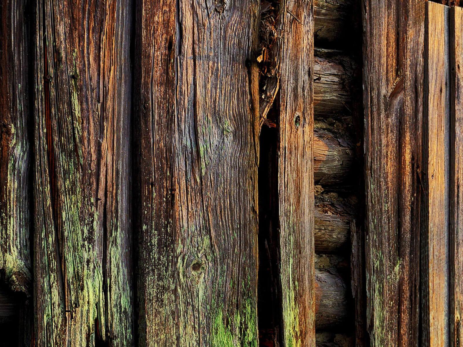 Как предотвратить гниение древесины.
